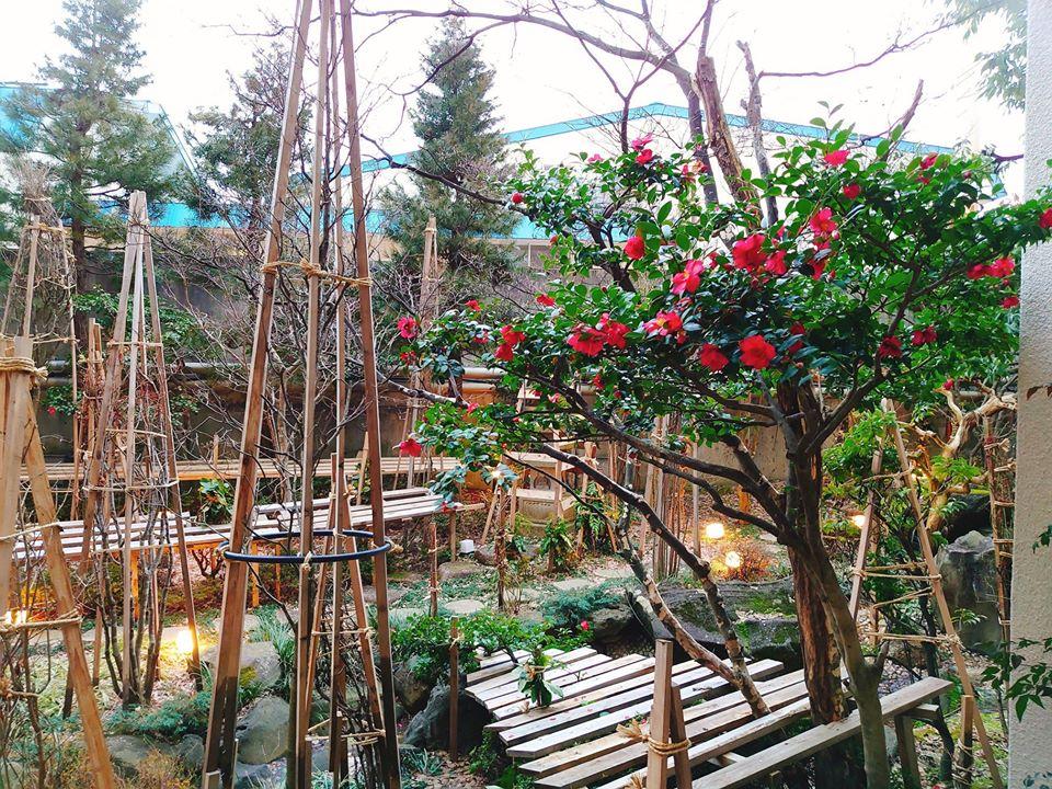 中庭庭園のツバキ